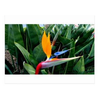 De Bloem van de paradijsvogel - Californië Briefkaart