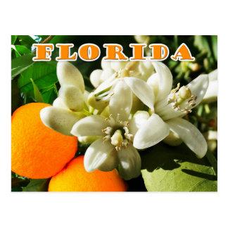 De Bloem van de Staat van Florida: De oranje Briefkaart