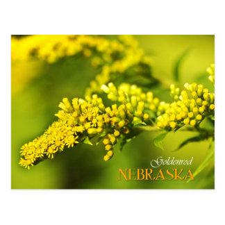 De Bloem van de Staat van Nebraska: Goldenrod Briefkaart
