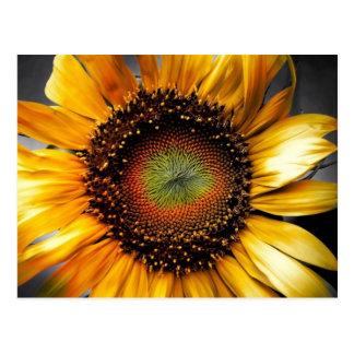 De Bloem van de zon Briefkaart