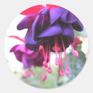 De bloem van Fuschia, paarse en hete roze Ronde Sticker