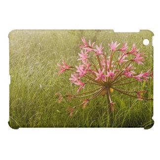 De Bloem van kandelabers (Brunsvigia Radulosa) Hoesje Voor iPad Mini