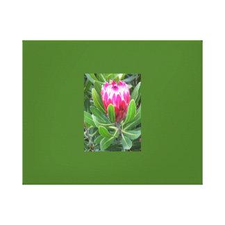 De Bloem van Protea Canvas Afdruk