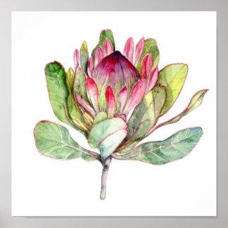 De Bloem van Protea Poster