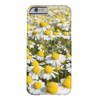 De bloemclose-up van de kamille, Hongarije Barely There iPhone 6 Hoesje