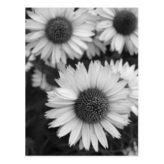 De Bloemen van de kegel - Daisy - in Zwart-wit Briefkaart