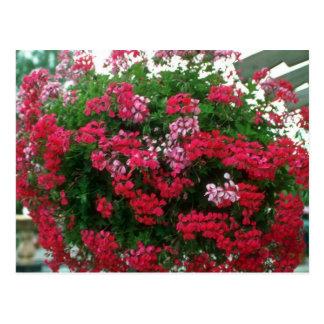 De bloemen van de klimop van de Geranium Briefkaart