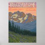 De Bloemen van de lente - Nationaal Park Yellowsto