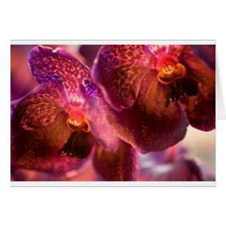 De Bloemen van de Was van Vanda Pure's van de Kaart