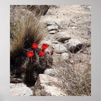 De Bloemen van de woestijn, het Nationale Park van Poster