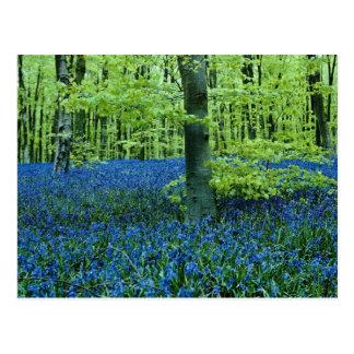 De bloemen van het Bos van het Klokje van Aqua Briefkaart