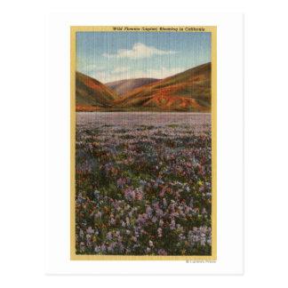 De Bloemen van Lupine van CaliforniaWild in Bloei Briefkaart
