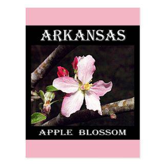 De Bloesem van Arkansas Apple Briefkaart