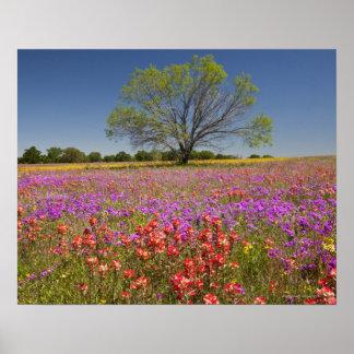 De bomen die van de lente mesquite in wildflowers  poster