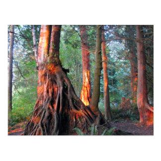 De Bomen van de brand Briefkaart
