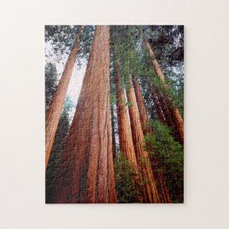 De bomen van de Californische sequoia van de Puzzel