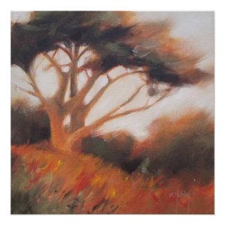 De Bomen van de Cipres van Californië Monterey Poster