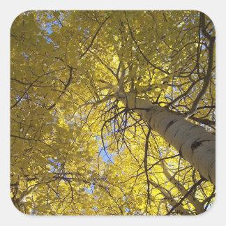 De bomen van de esp en blauwe hemelen vierkante sticker
