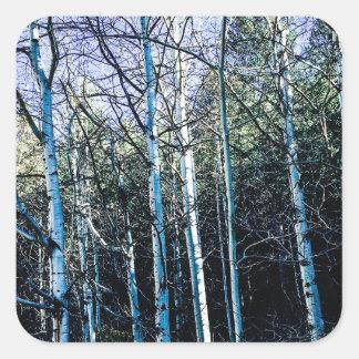 De bomen van de esp in de herfst vierkante sticker