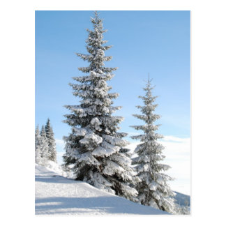 De bomen van de heuveltop briefkaart