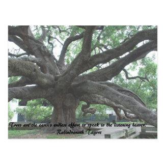De bomen zijn de Eindeloze Inspanning van de Briefkaart