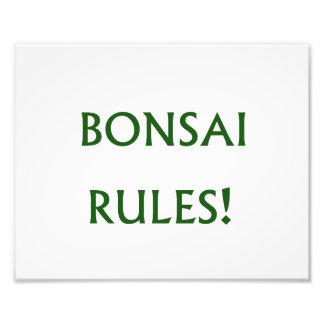 De bonsai beslist Groene Teksten Foto