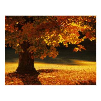 De boom van de esdoorn, Bennington, Vermont Briefkaart