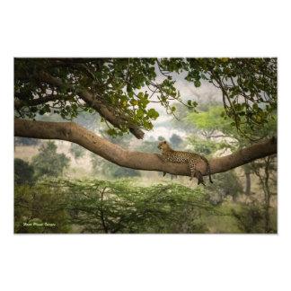 De Boom van de luipaard Foto