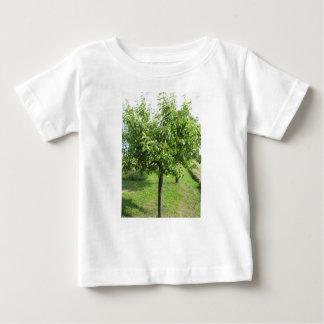 De boom van de peer met groene bladeren en rode baby t shirts
