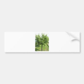 De boom van de peer met groene bladeren en rode bumpersticker