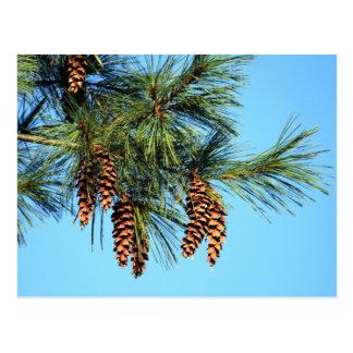 De Boom van White Pine Briefkaart