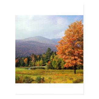 De boom zet Mansfield Vermont op Briefkaart