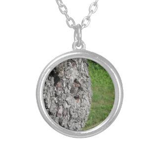 De boomboomstam van de peer tegen groene zilver vergulden ketting