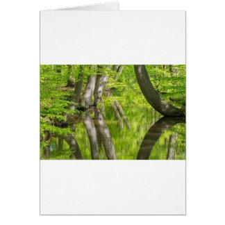 De boomboomstammen van de beuk met water in de briefkaarten 0