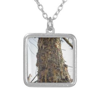 De boomhars van de pijnboom op de boomstam zilver vergulden ketting
