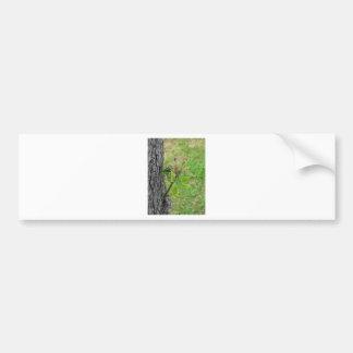 De boomtakje van de peer met knoppen in de lente bumpersticker