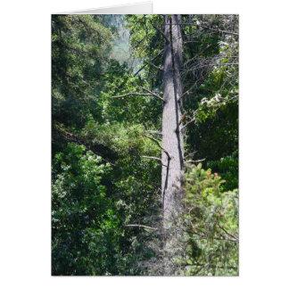 De Bossen van de sequoia Briefkaarten 0