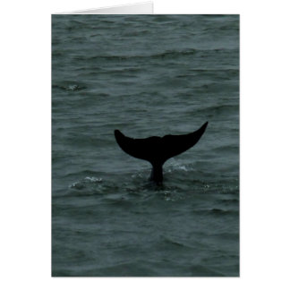 De Bot van de dolfijn Kaart