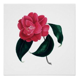 De botanische druk van Camelia Perfect Poster