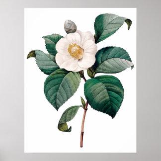 De botanische druk van de KWALITEIT van de PREMIE  Poster