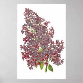 De BOTANISCHE DRUK van de lila PREMIE Poster