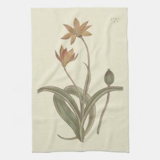 De Botanische Illustratie van de Tulp van de kaap Theedoek