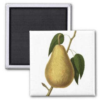 De botanische Peer van het Fruit Magneet