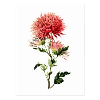 De botanische Rode Knoop van de Vrijgezel Briefkaart