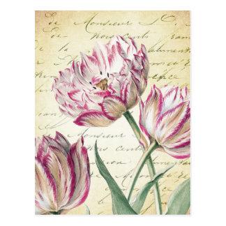 De botanische Roze en Witte Illustratie van de Briefkaart