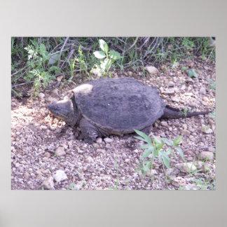 De Brekende Schildpad van Kansas Poster
