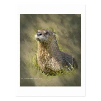 De Briefkaarten van de Otter van het zee Briefkaart