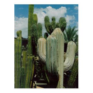 De Cactus van het zuidwesten Briefkaart