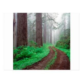 De Californische sequoia Californië van de boom Briefkaart