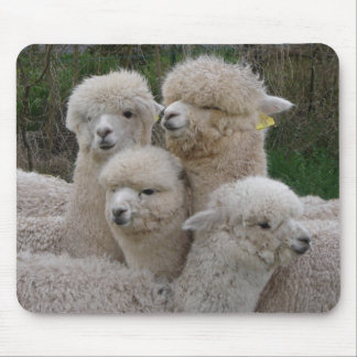 De Close-up van Alpacas Muismat